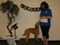 PDC-May-2018-Puppy-2018-05-21-005